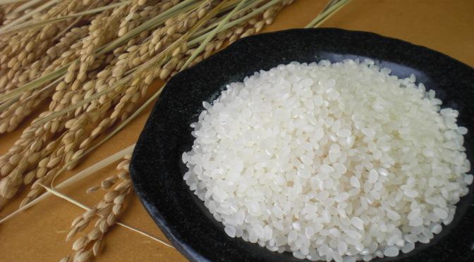 昔ながらの『天日干しはざかけ米』コシヒカリ