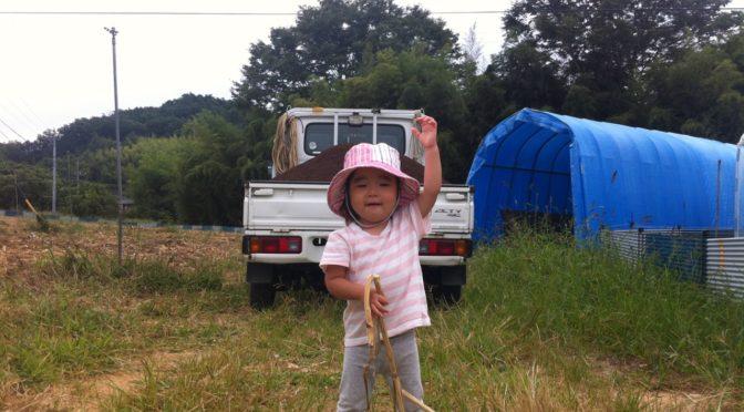 収穫と収穫の合間