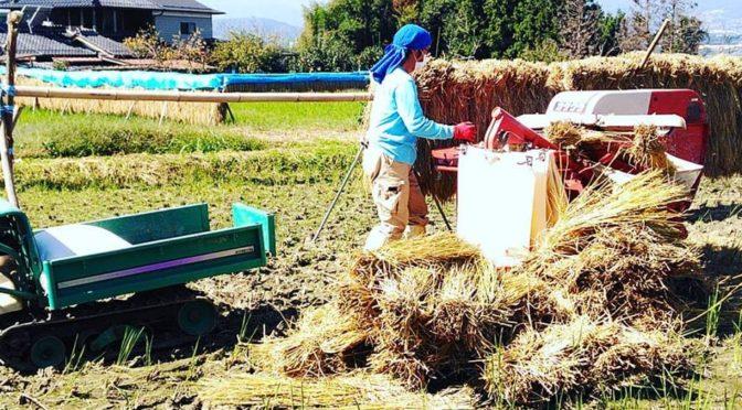 はざかけ米の脱穀が終わりました!新米の販売開始です!